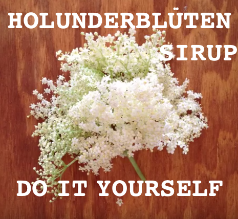 Lifehack: Home-made Holunderblüten-Sirup